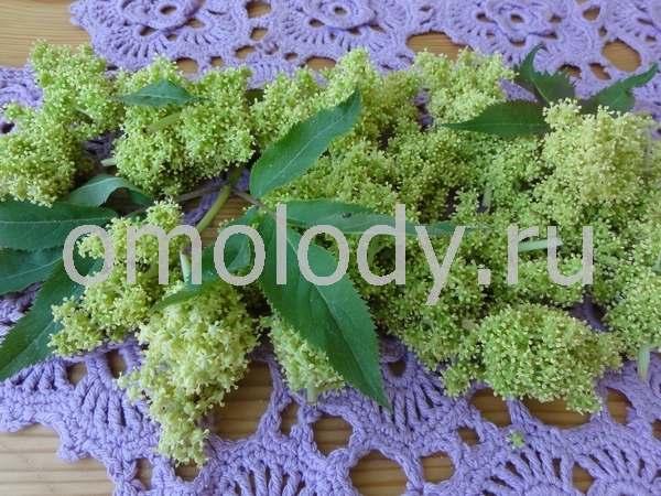 оладьи из соцветий бузины
