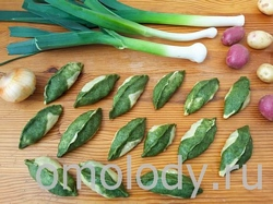пельмени с грибами из зеленого теста